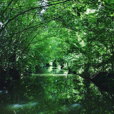 Arcais, Francia: Venise Verte à Arçais