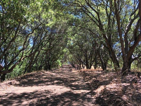 Lafayette, كاليفورنيا: photo2.jpg