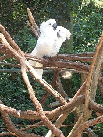 Scotland Neck, North Carolina: Sylvan Heights Bird Park