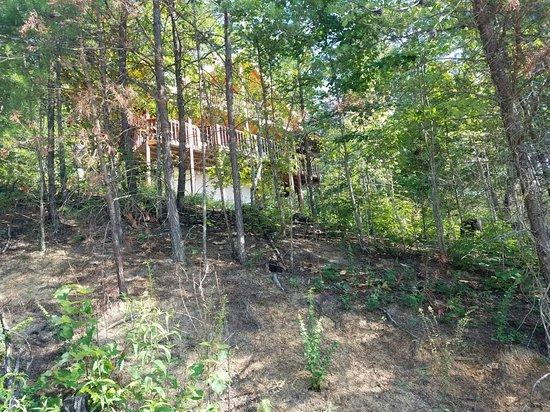 Timberwinds Log Cabins: 20160720_093758_large.jpg
