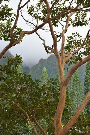 Kaneohe, Havai: photo3.jpg