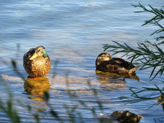 Ducks settling in for the evening.