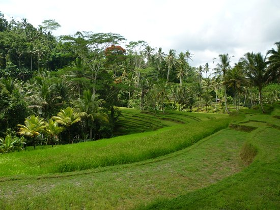 Tegalalang, Indonesien: Grounds