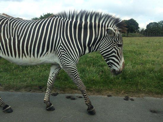 Some of the animals of Woburn safari park