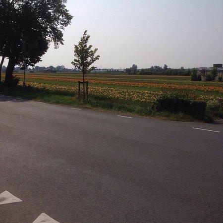 Hillegom, Nederland: photo2.jpg