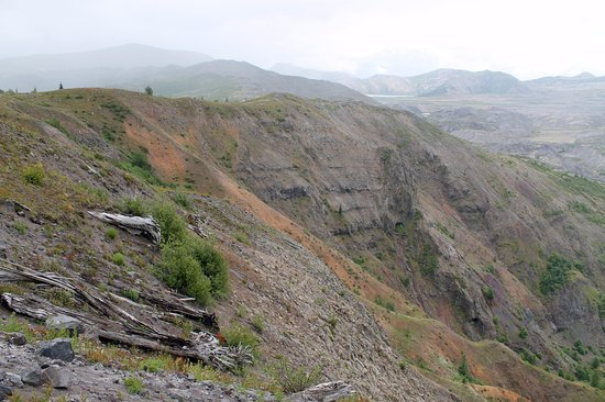 Toutle, Вашингтон: Trees knocked down by the eruption