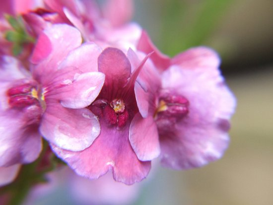 Eastcote, UK: Flowers in the beautiful gardens