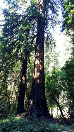 Mill Valley, Californien: 20160722_102628_1469290041946_large.jpg