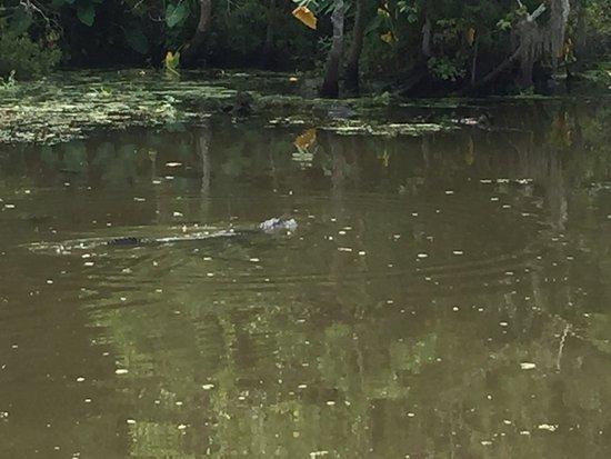 Уэствего, Луизиана: photo4.jpg