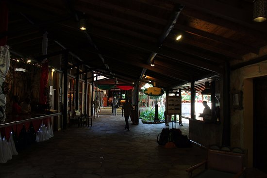 写真ホテル サロバ マラ ゲーム キャンプ枚