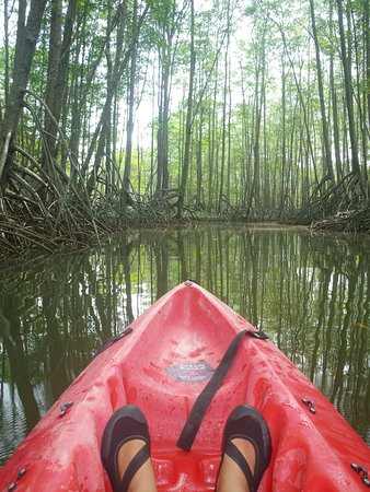 Dominical, Costa Rica : Your view of Mangrove tranquility