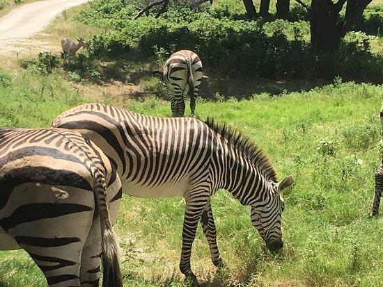 Fossil Rim Wildlife Center: photo7.jpg