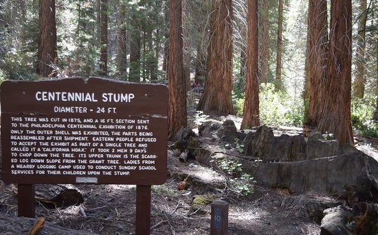 Three Rivers, Kalifornia: Centennial Stump info