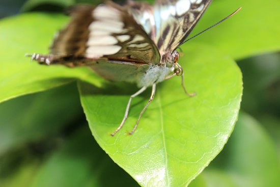 Westford, MA: Butterfly 1