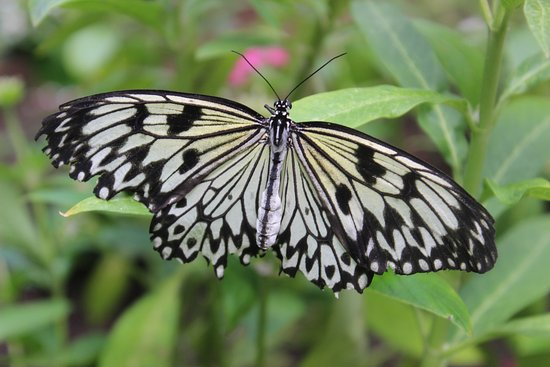 Westford, MA: Butterfly 2