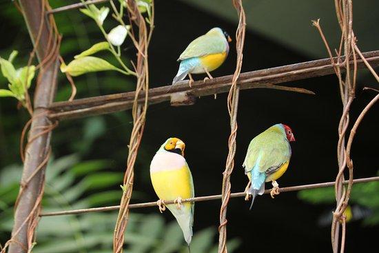 เวสต์ฟอร์ด, แมสซาชูเซตส์: Birds at the place