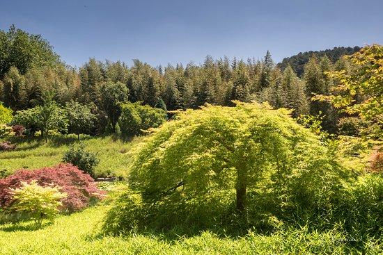 Generargues, Frankrike: jardin