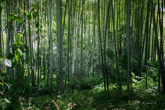 Generargues, Frankrike: oeuvre d art éphémère tissée dans les bambous