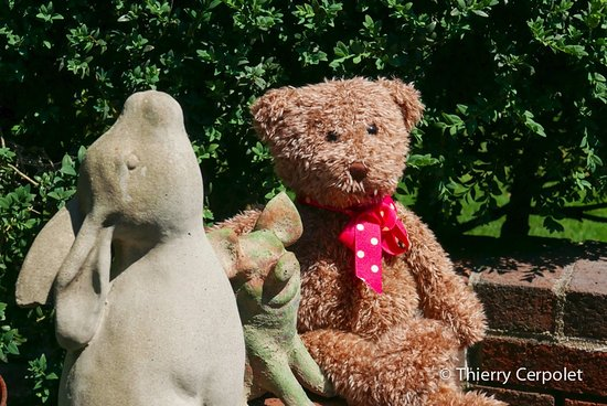 Barnstable, MA: Teddy and his old good friends