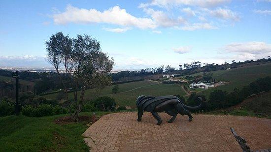 Constantia, Südafrika: DSC_0687_large.jpg
