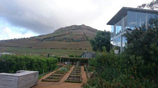 Constantia, Sydafrika: DSC_0683_large.jpg