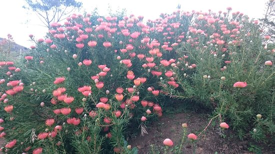 Constantia, Afrika Selatan: DSC_0694_large.jpg