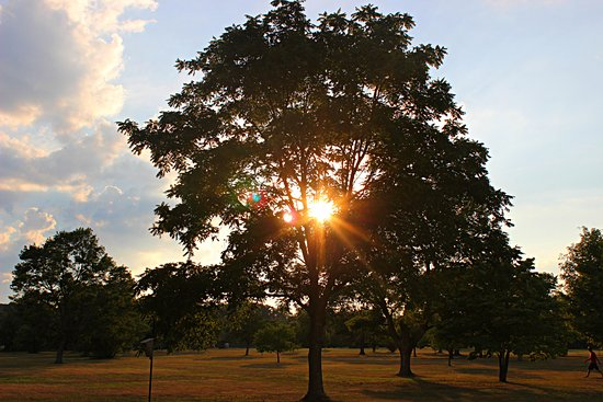 Framingham, MA: Many trees and a beautiful sunsent