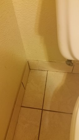 Greenfield, IN: Dirt and scum on tile near toilet