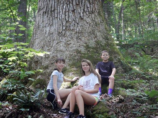 Cosby, TN : Our grandchildren in a virgin forest above Laurel Falls.