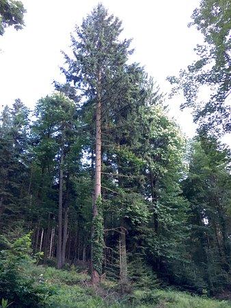 Schwarzwald, Deutschland: Black Forest