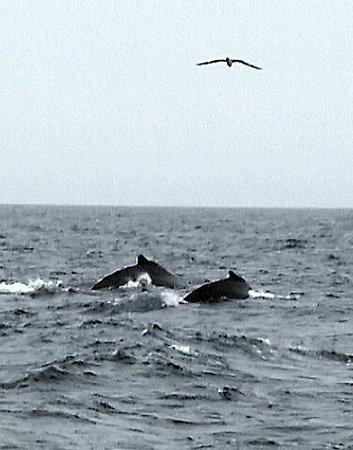 Foto de 7 Seas Whale Watch