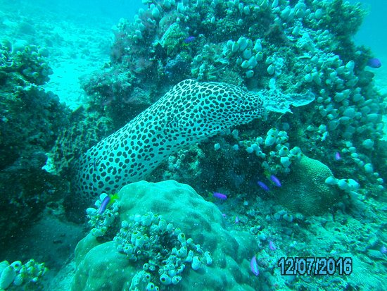 Gili Air, Indonesia: Black spotted moray