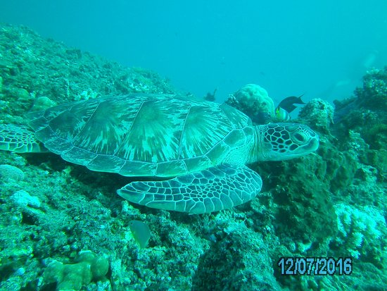 Gili Air, Indonesia: Turtle