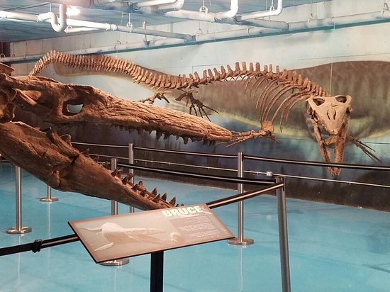 Canadian Fossil Discovery Centre: 20160716_110616_large.jpg