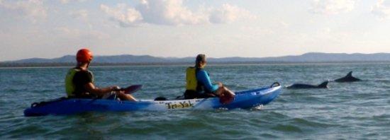 Seventeen Seventy, Australia: Dolphin spotting