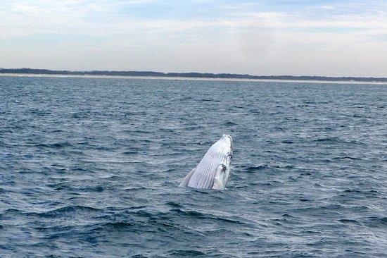 Mermaid Beach, Australie : More whales (we saw 8)
