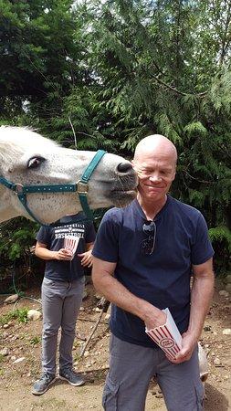 Roberts Creek, Canada: horse kisses
