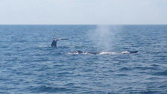 Cape Ann Whale Watch: 20160723_154415_large.jpg