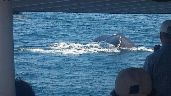 Cape Ann Whale Watch: 20160723_153212_large.jpg