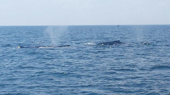 Cape Ann Whale Watch: 20160723_154406_large.jpg