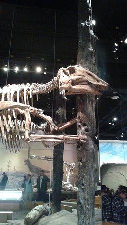 Royal Tyrell Museum: 20160715_165539_large.jpg