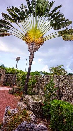 Homestead, FL: photo4.jpg