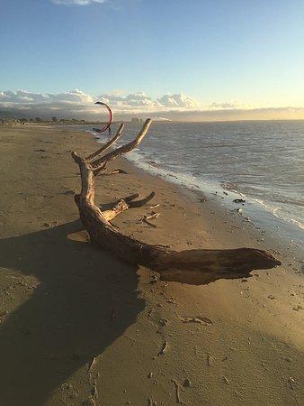 Nelson, Selandia Baru: Tahunanui Back Beach drift wood after a storm