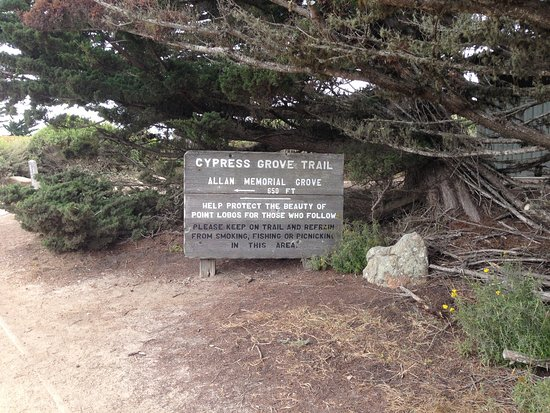 Point Lobos State Reserve: Cypress Grove trail