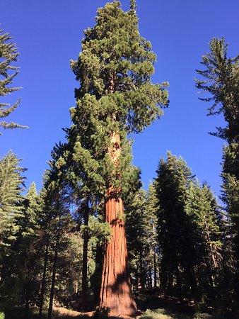 Visalia, Kaliforniya: photo0.jpg