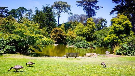 Picture Of San Francisco Botanical Garden San Francisco Tripadvisor