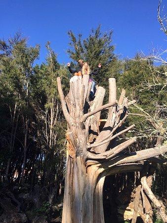 Motueka, New Zealand: Jester House playground climbing tree