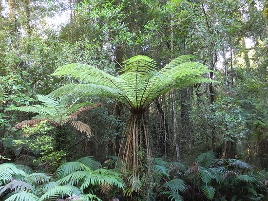 Hokitika, New Zealand: Trail along lush forest