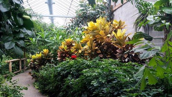 Cambridge, Canada : large plant