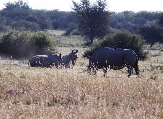 Serowe, Botswana: Khama Rhino Sanctuary